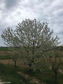 Carlino / Friuli-Venezia Giulia / Italy - 4/4/19