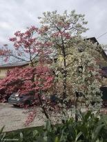 Case Geremia / Veneto / Italy - 4/13/19