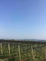 San Martino Buon Albergo / Veneto / Italy - 4/18/19