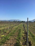 Pastrengo / Veneto / Italy - 4/20/19