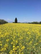 Ponti sul Mincio / Lombardy / Italy - 4/20/19