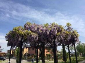 Volta Mantovana / Lombardy / Italy - 4/21/19