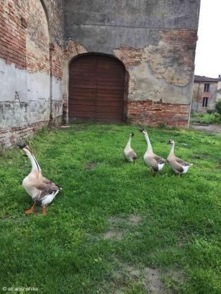 Motta San Fermo / Lombardy / Italy - 4/26/19