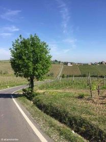 Ziano Piacentino / Emilia–Romagna / Italy - 5/2/19