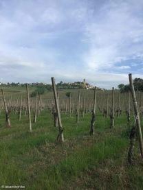 Cigognola / Lombardy / Italy - 5/3/19