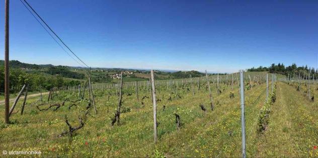 Monleale / Piedmont / Italy - 5/6/19