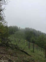 Fraconalto / Piedmont / Italy - 5/11/19