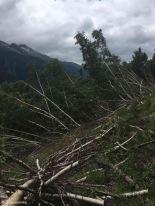 Obergoms / Valais / Switzerland - 7/15/19