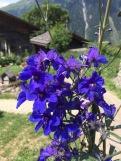 Bellwald / Valais / Switzerland - 7/17/19